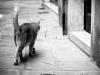 On croise aussi des chats dans les petites rues